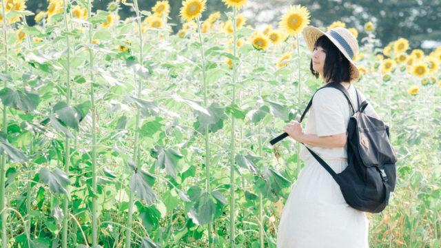 ひまわり畑にいる女性